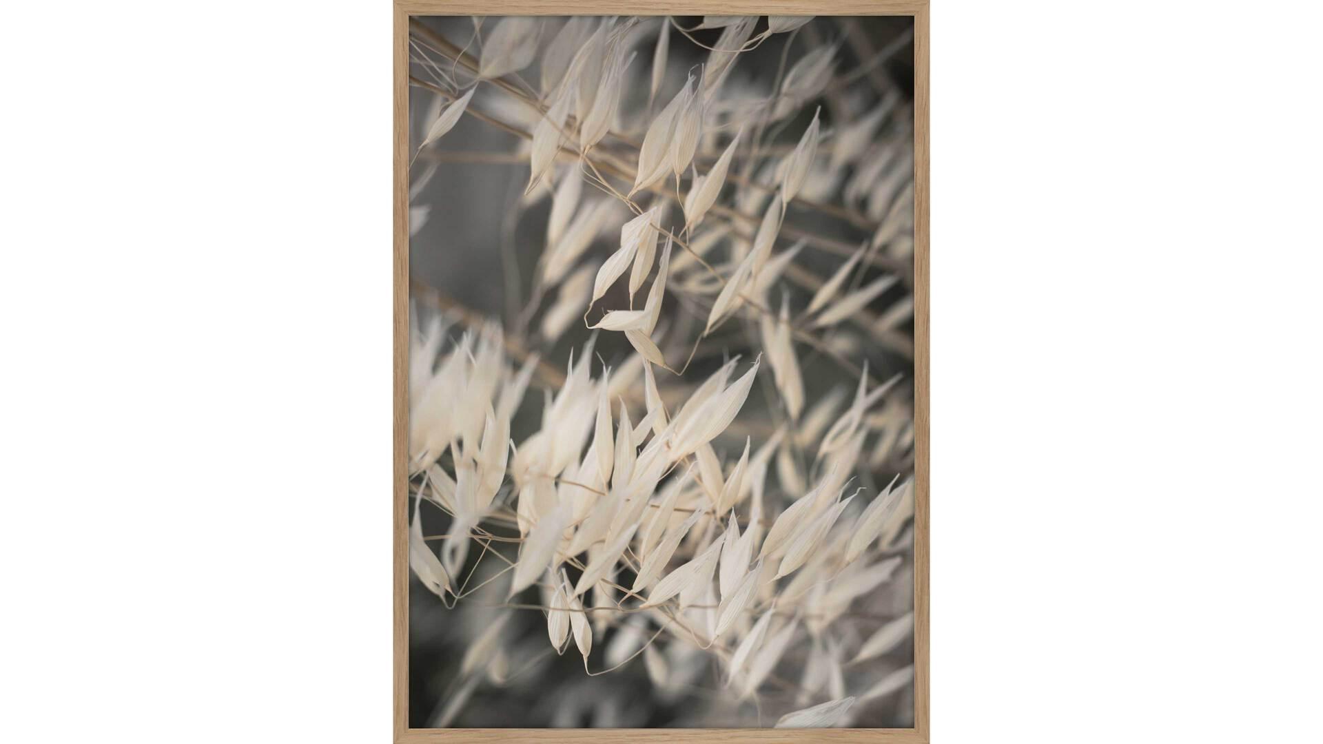Interliving BEST BUDDYS! Posterdruck Mellow Grasses 4