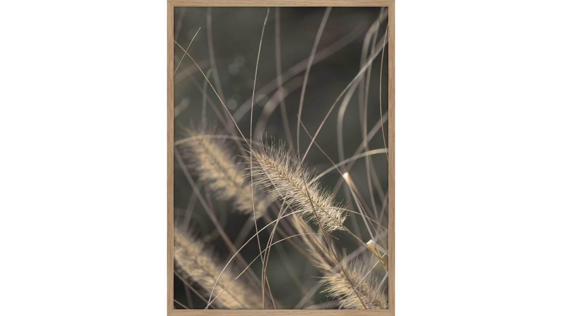 Interliving BEST BUDDYS! Kunstdruck Mellow Grasses 2